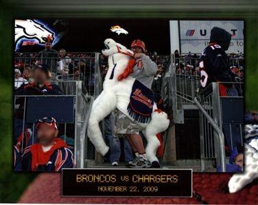 bronco-horse